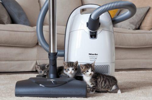 cat-vacuum