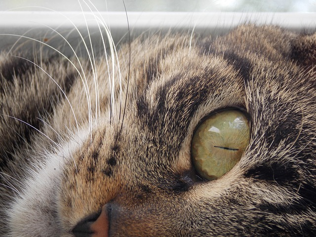 signs your cat will live long life