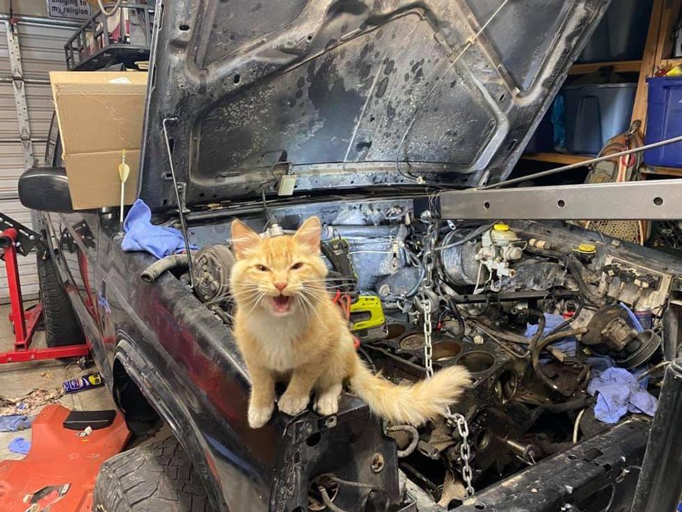 cat, jeep