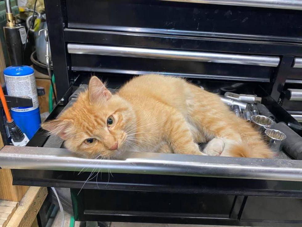 cat, tool box