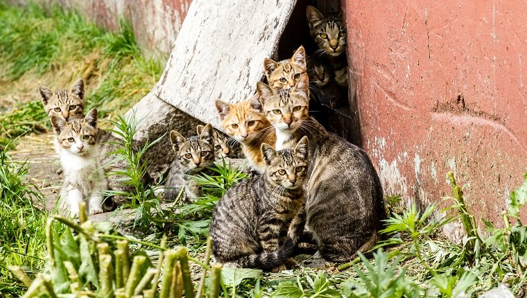 Large group of homeless kittens in a city street near the house