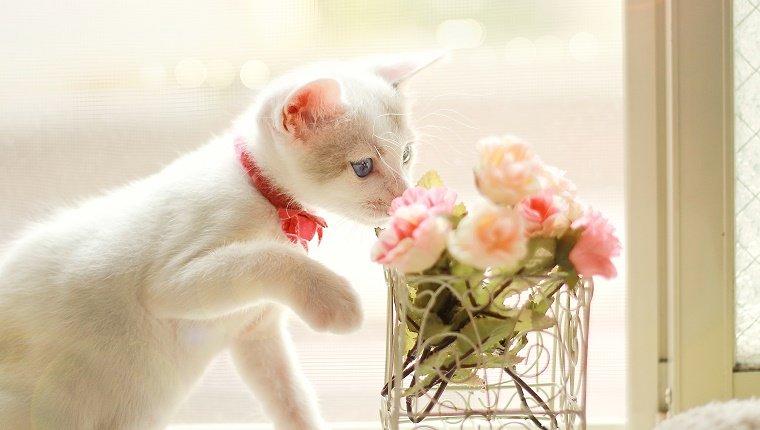 Kitten and flower.