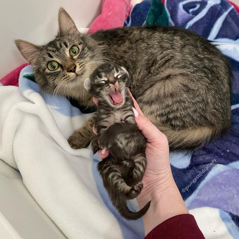 cat mom, kitten, mini me, only kitten