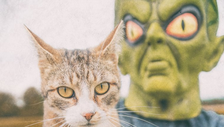 Cat with alien