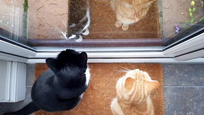 cats look out front door