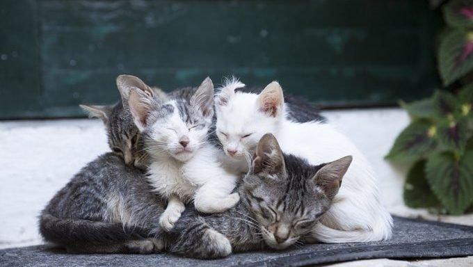 stray-cat-kittens