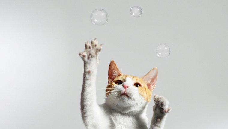 Cat chasing bubbles