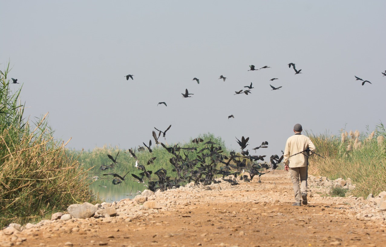 NCE team counting birds in a waste water treatment station in the south of Egypt © Mohamed Wakry