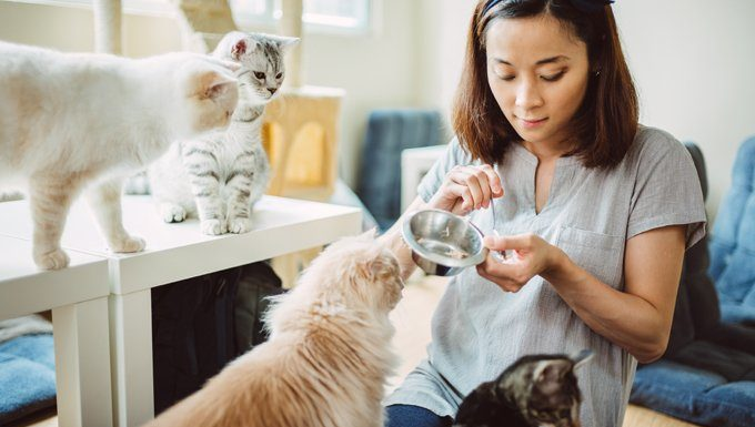 pet sitter feeds cats during professional pet sitters week