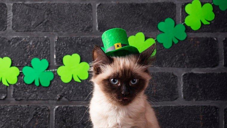 Cat in green leprechaun hat. St. Patrick's Day background