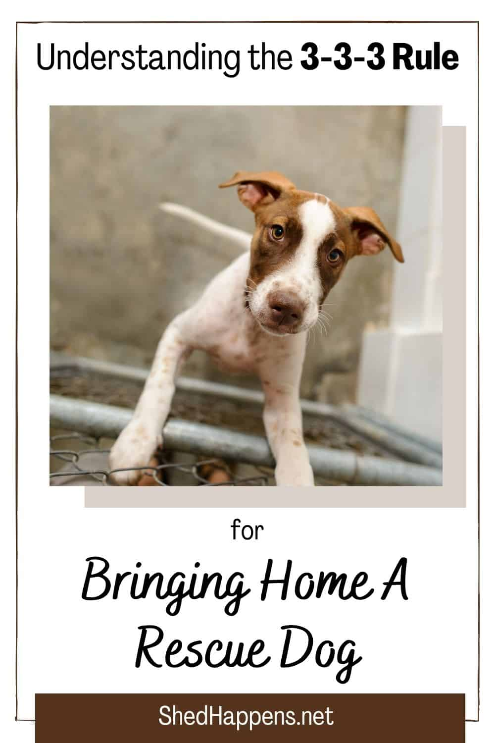 A small white short-haired dog with brown around its eyes and ears is standing in a kennel with its front feet up on the cage wall. Text reads understand the 3-3-3 rule for bringing home a rescue dog.