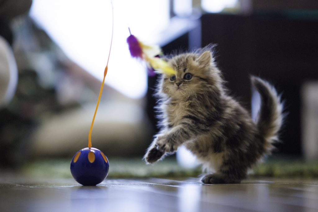 kitten with ball toy