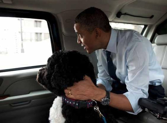 Presidential pet Bo with Barack Obama in car