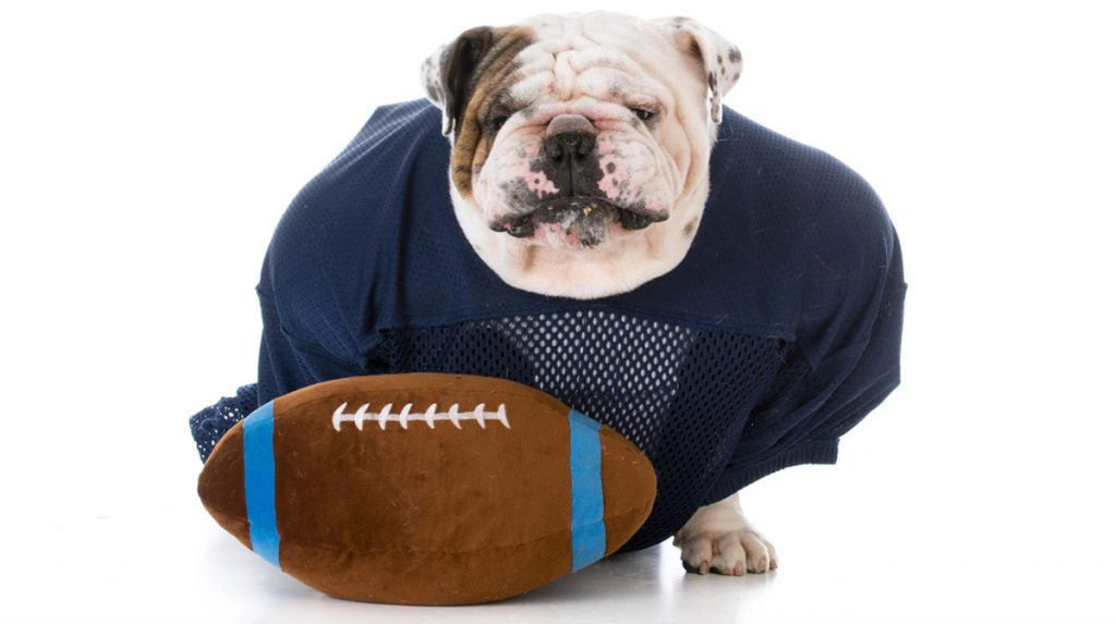 football for dogs