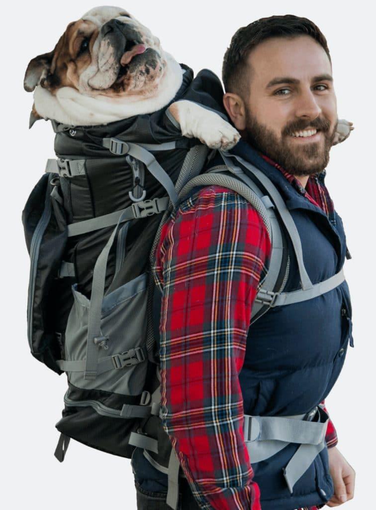 hefty bulldog in a backpack