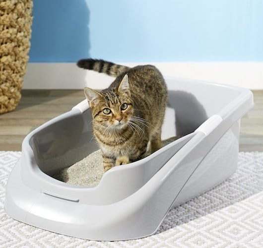 Lucky champ low-sided litter pan