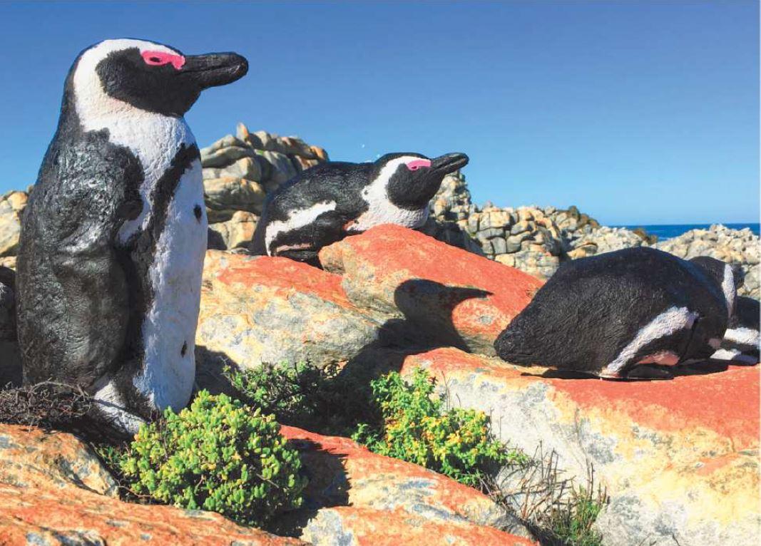 Models of African penguins in De Hoop nature reserve, South Africa © Cristina hagen