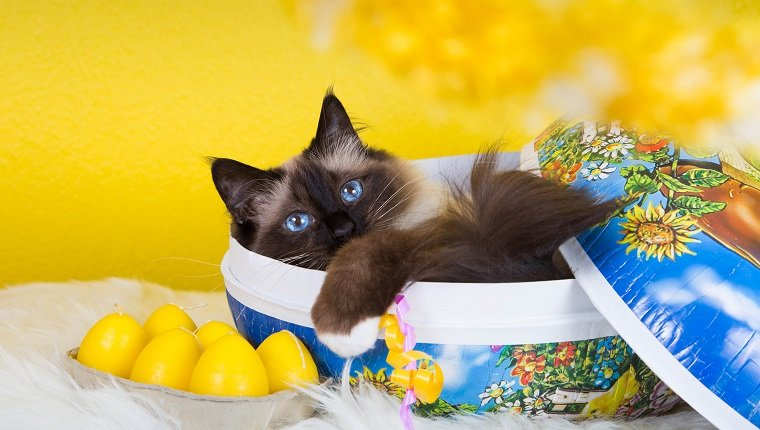 Cat in my easter egg