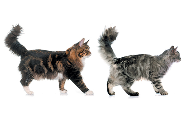 Cats with their tails up.