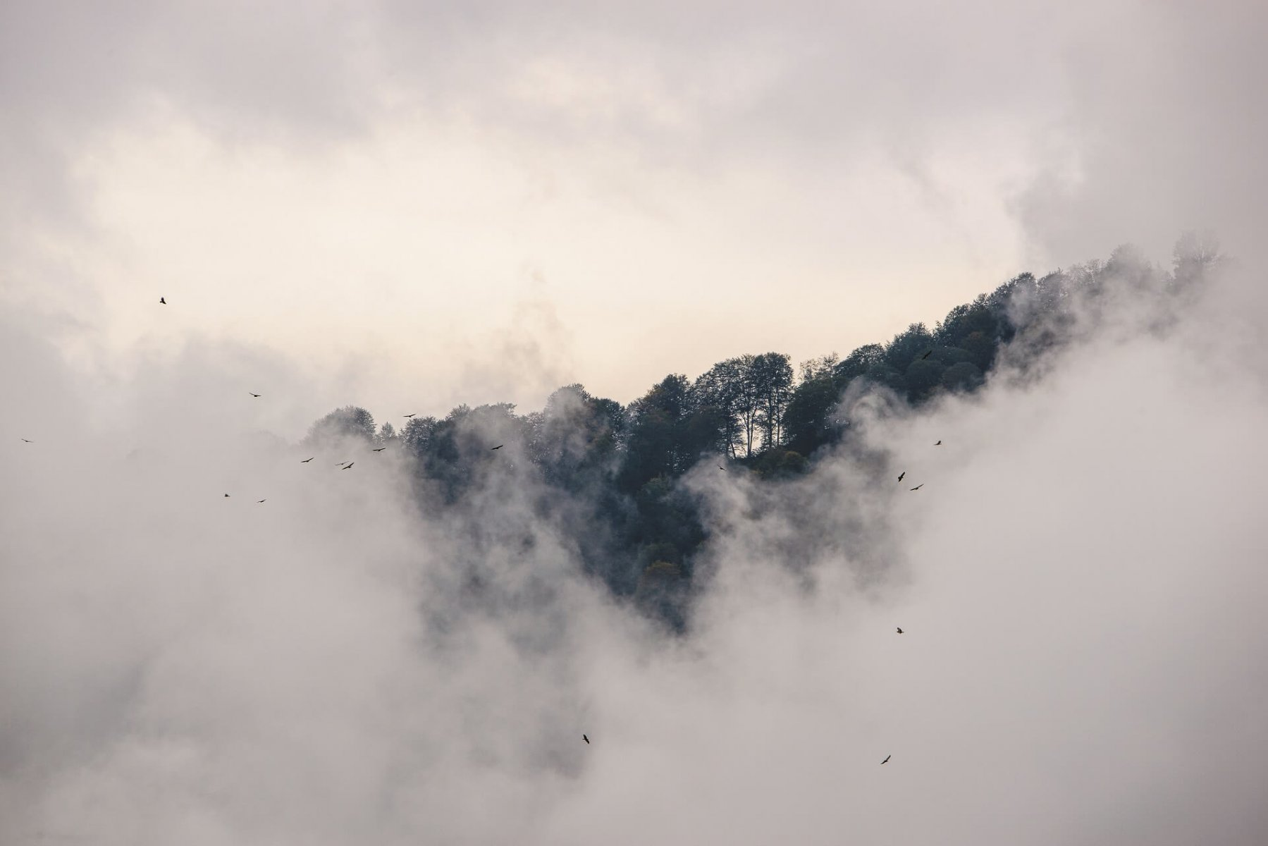 Raptors emerge from the mist as they glide higher and higher © Lars Soerink