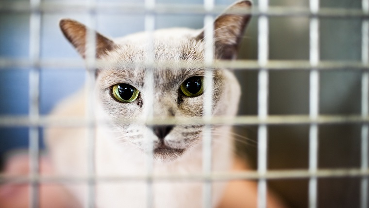 Cat in a cage on national adopt a shelter pet day
