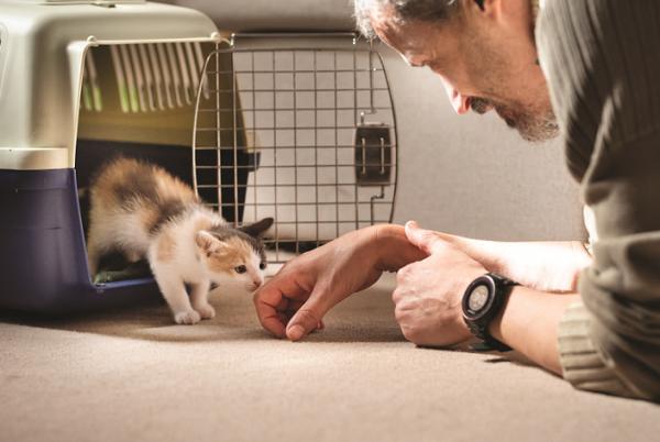 how to foster a kitten - kitten sniffing man's hand
