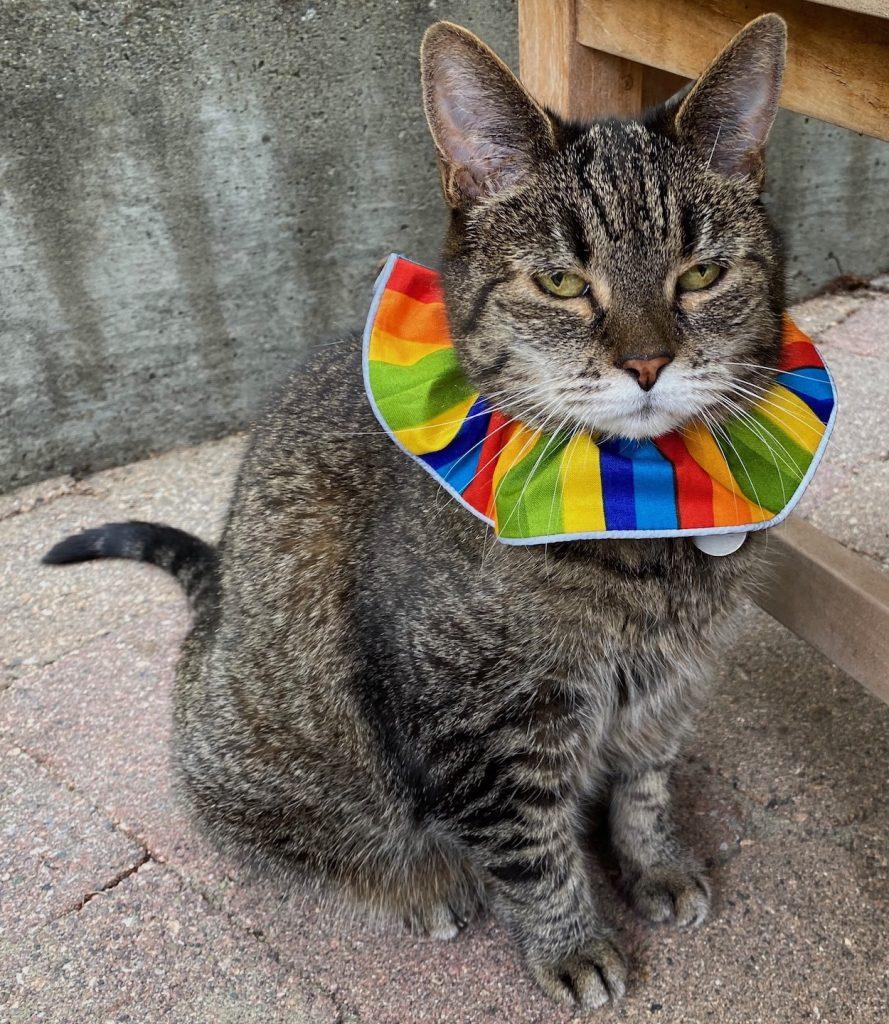 BirdsBeSafe collar on cat
