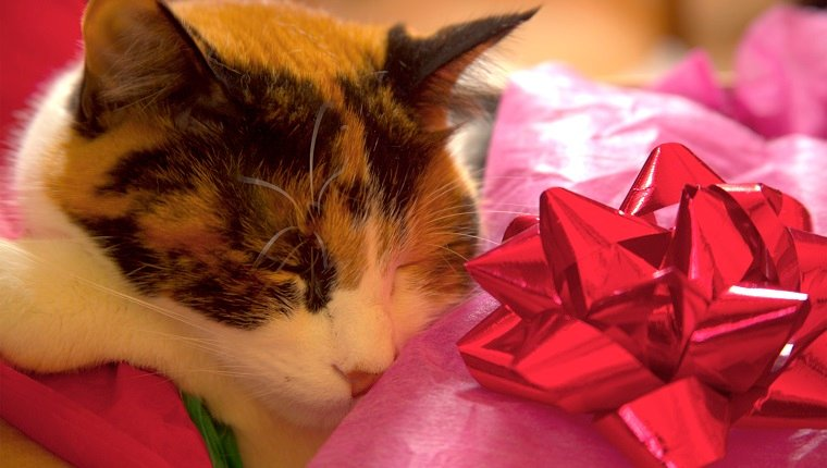 Cat sleeping inside wrapping paper with red bow