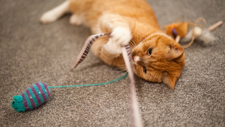 A ginger cat plays with some cat toys