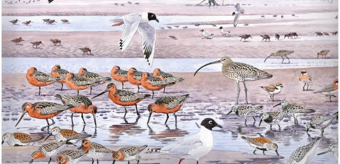 A depiction of the thriving diversity of shorebirds found at China's mud flats © Richard Allen