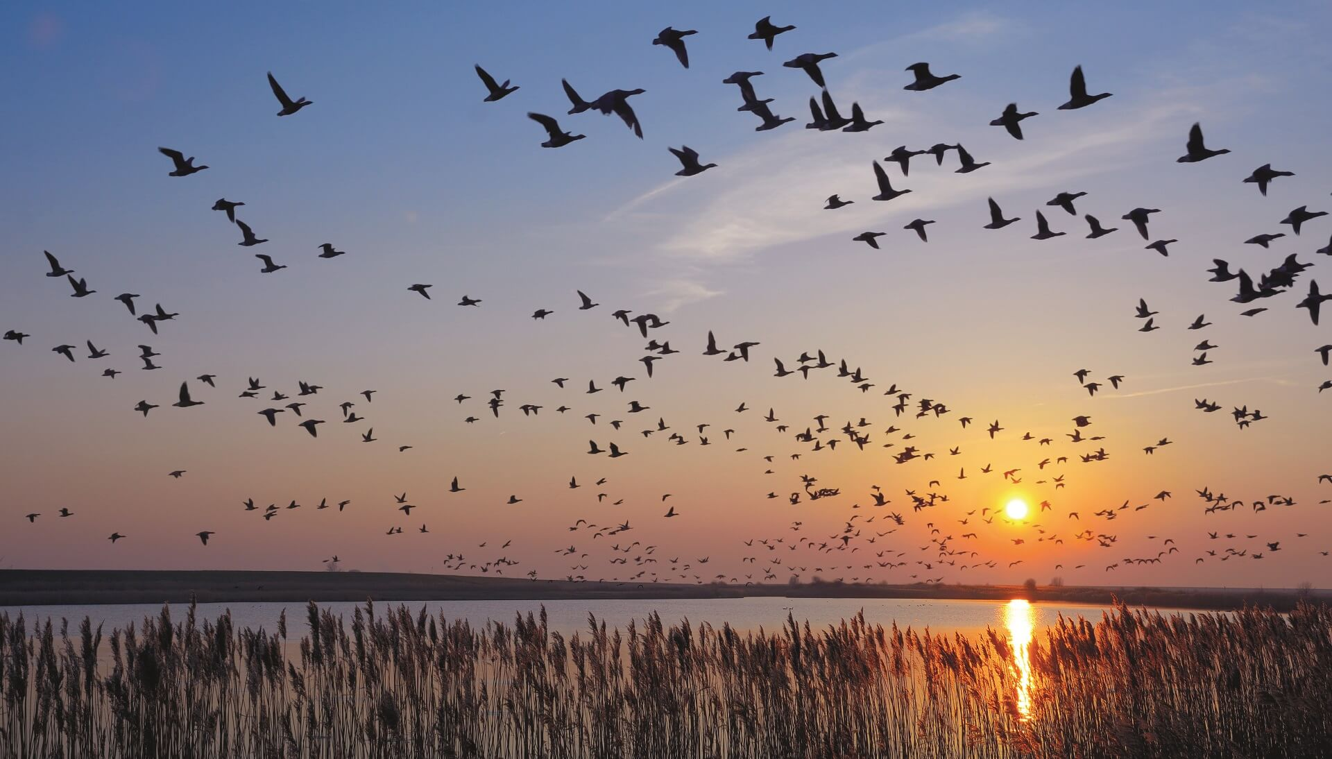 12 million waterbirds can be found at the Wadden Sea © Travelpeter / Shutterstock
