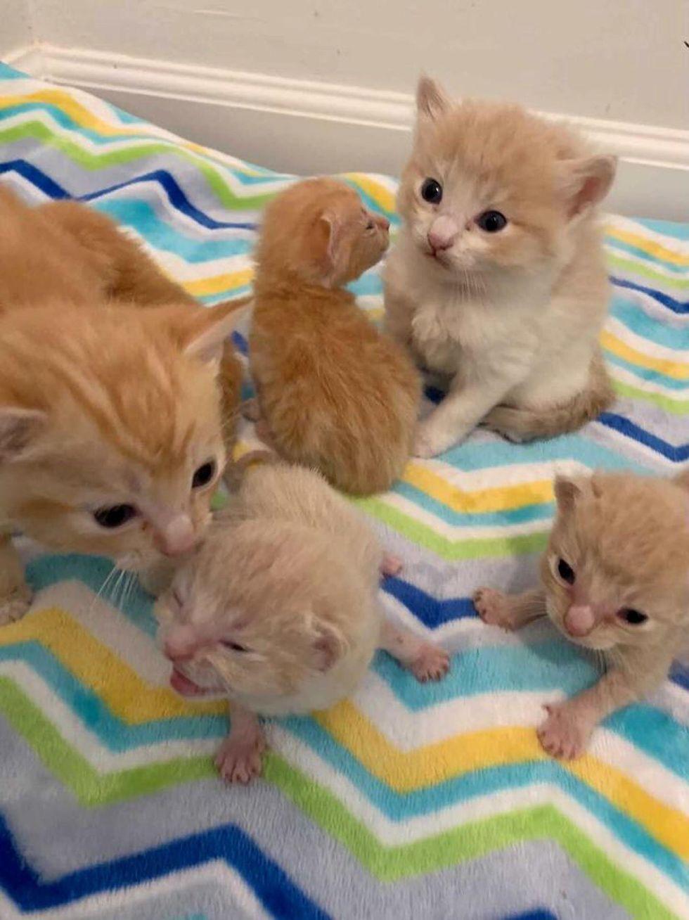 ginger kittens, adorable kittens