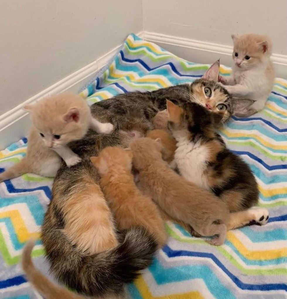 cat mom, nursing, baby kittens