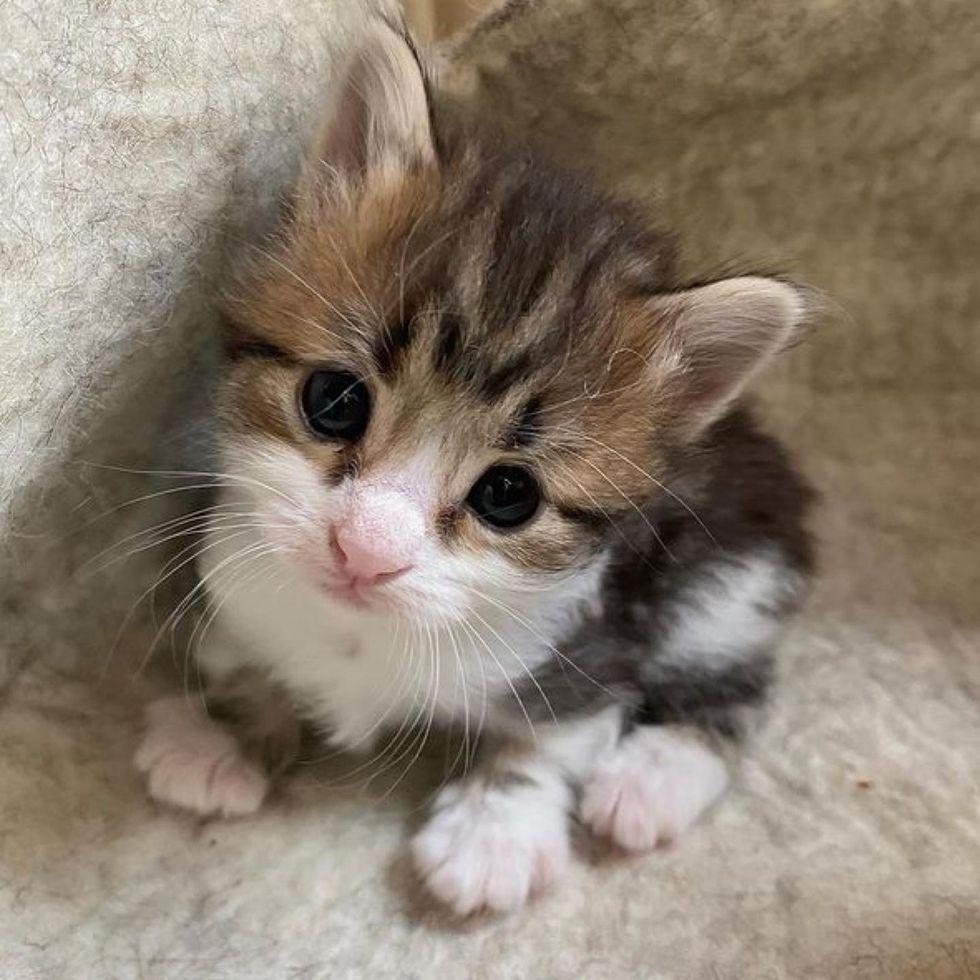 sweet, kitten, paws