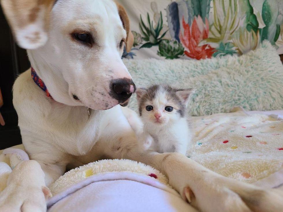 cute kitten, dog, pup