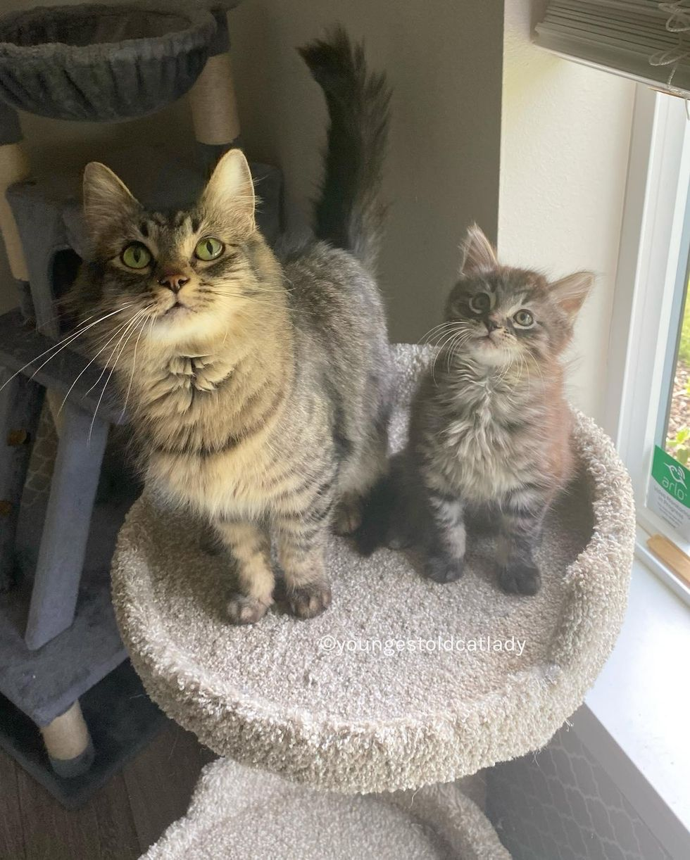 tabby cats, mom and son