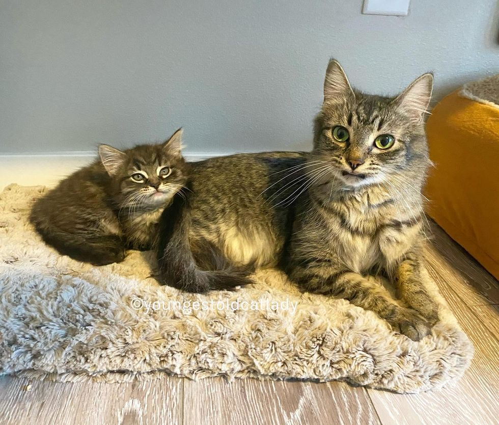 tabby cats, snuggles