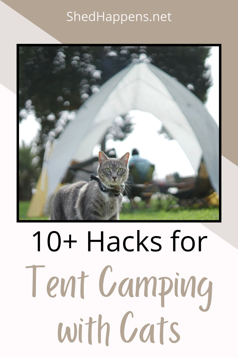 A silver-grey tabby cat is standing outdoors in the grass, wearing a cat harness. In the distance, people are sitting at a picnic table under a tent. Text states: 10+ hacks for tent camping with cats.