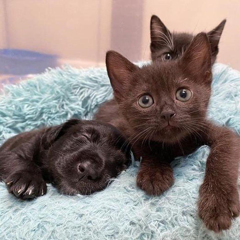 smiley puppy, unlikely friends, cute kittens