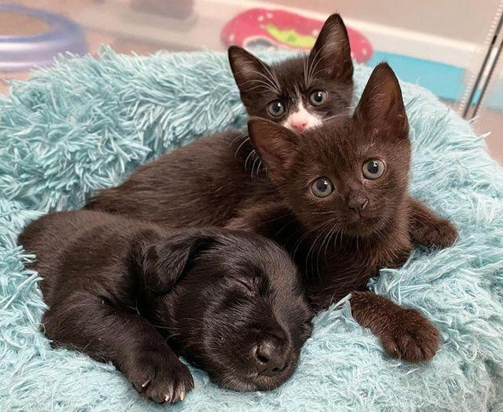 puppy and cats, sweet friends