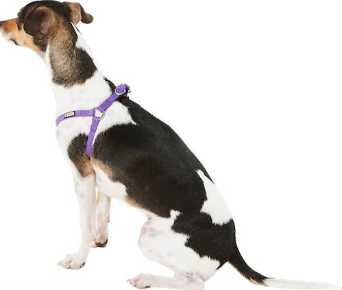 Pawtitas harness photo