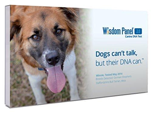 box of Wisdom Panel dog DNA test kit for dog dad gift