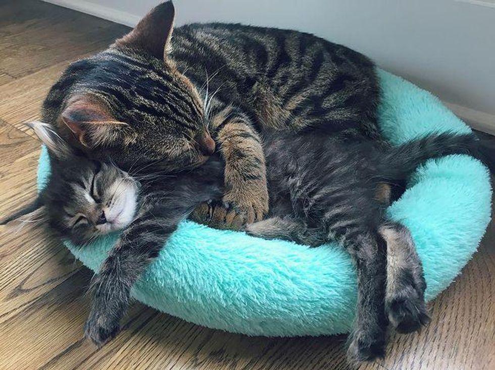 kitty hug, loving cat, big hug