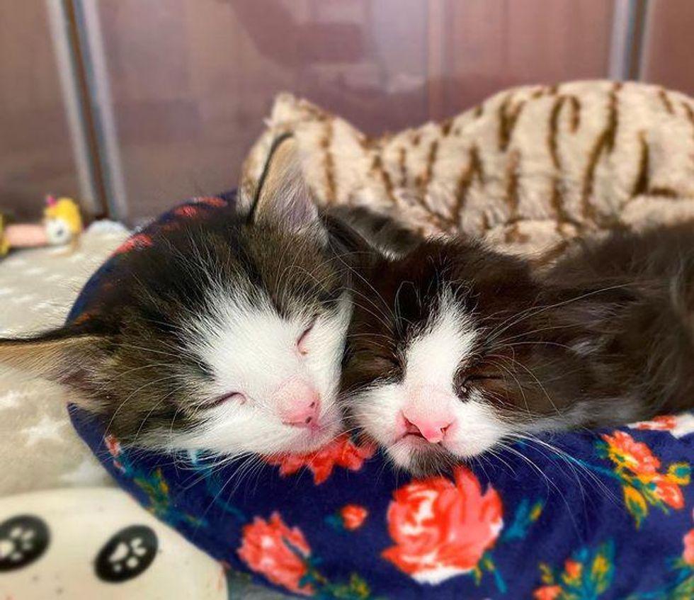 snuggly sleepy kittens