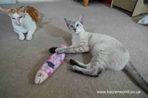 Katzenworld Japanese cat toy0022