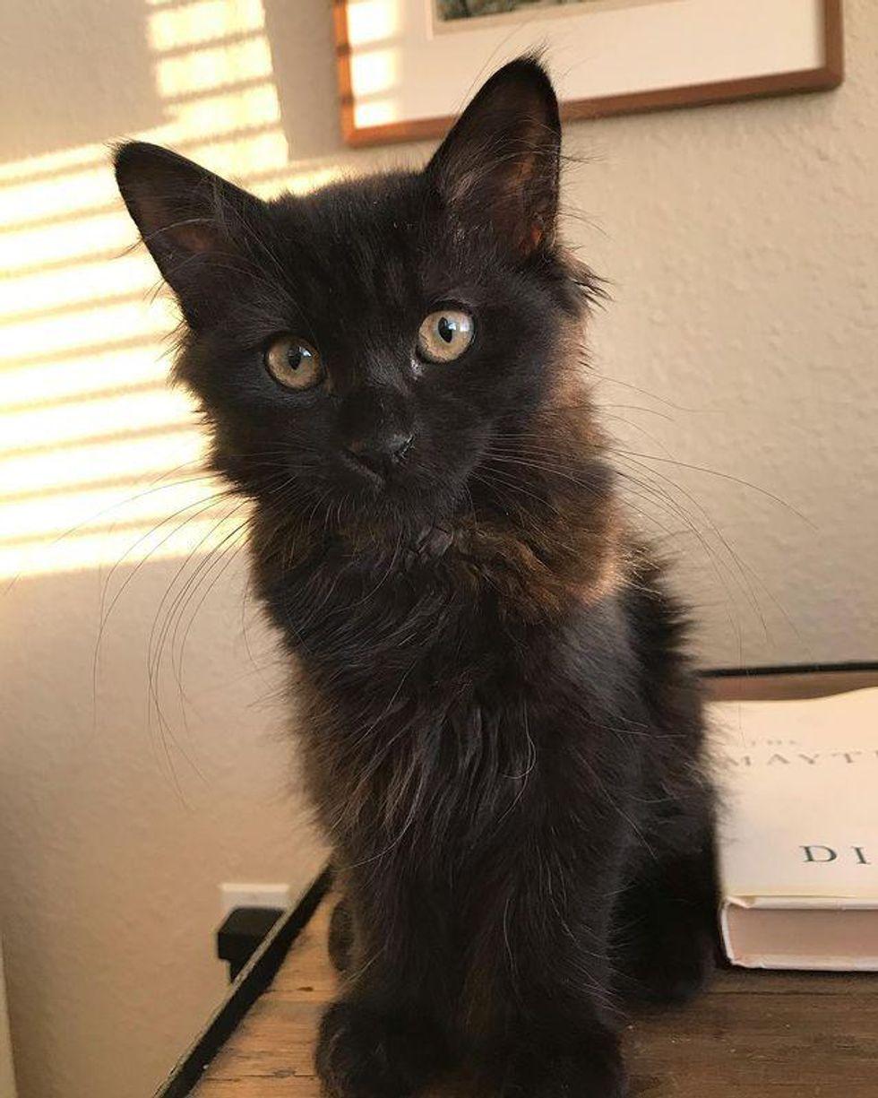 fluffy black cat