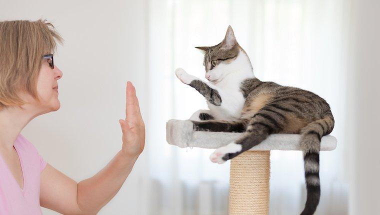 Woman teaching cat to high five