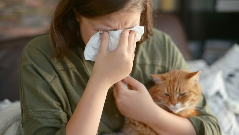 Animal allergy (cat)