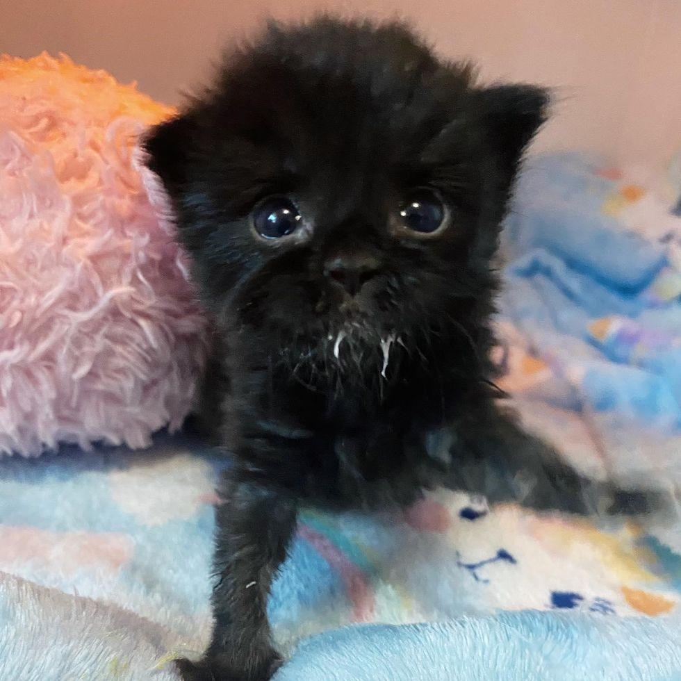 black kitten, bottle kitten