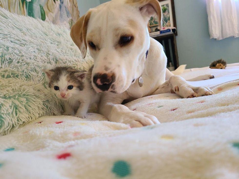 kitten, dog, best friends